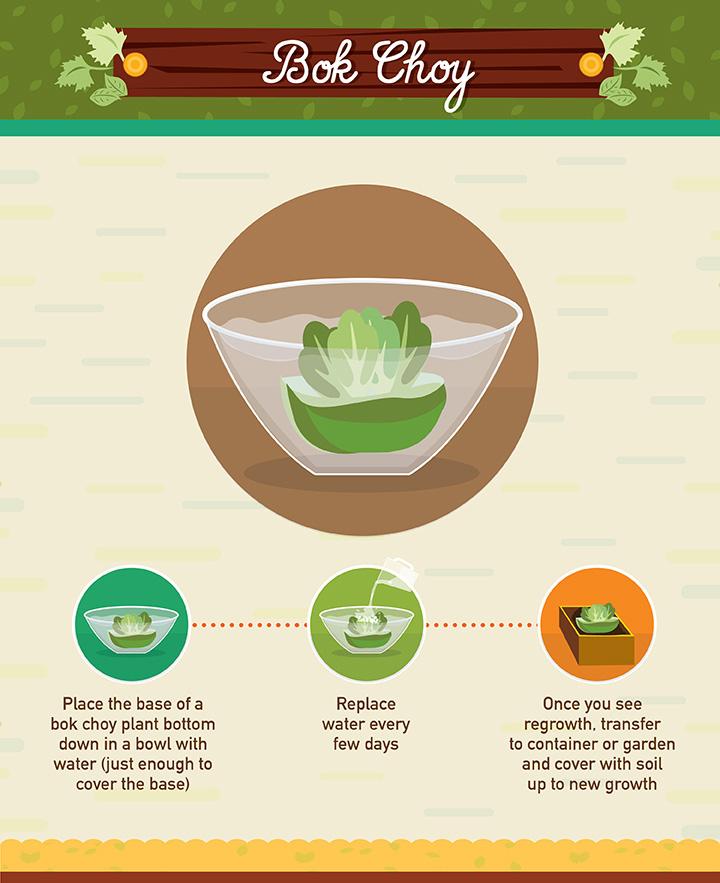 19 Foods You Can Regrow